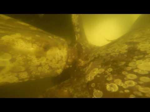 """Hull Inspection for """"Bucci's Italian Restaurant,"""" Hilton Head Island"""