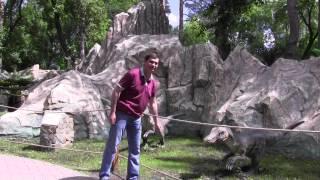 Фильм Динозавры динопарк в зоопарке