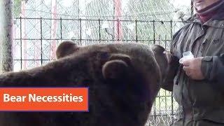 Bear Sets Up Layer