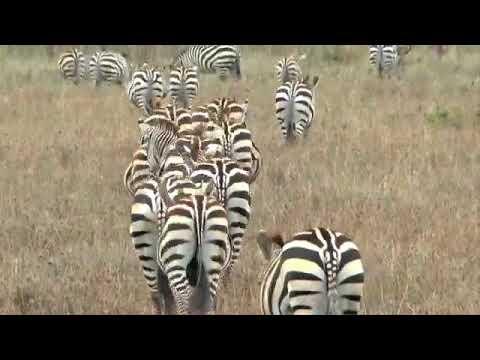 RANDILEN Wildlife Management Area Tanzania