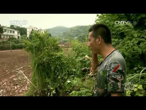 CCTV1-中国人的活法 第六集 大巴山里的玫瑰梦