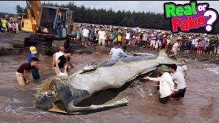 क्या जलपरियां सच में होती है ? Proof of Mermaid's Existence - Real or Fake