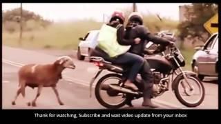 Funny Animal - Động vật vui nhộn #1