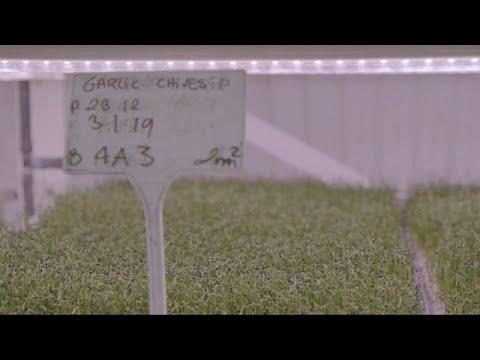 شاهد: زراعة النباتات الخضراء تحت الأرض تعطي ثمارها  - نشر قبل 23 دقيقة