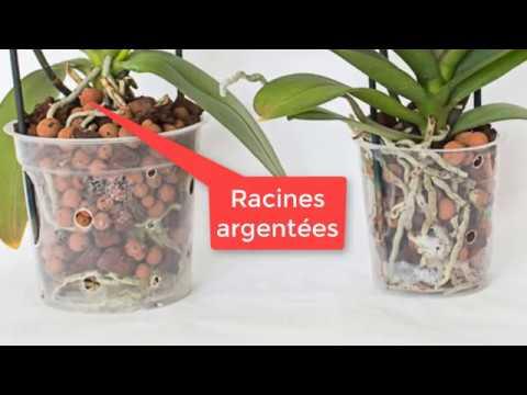 orchid es arrosage de phalaenopsis youtube. Black Bedroom Furniture Sets. Home Design Ideas