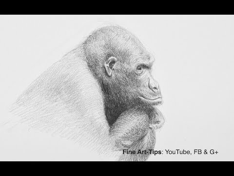 How to Draw a Gorilla - Narrated (Testing Staedtler Charcoal Pencils)