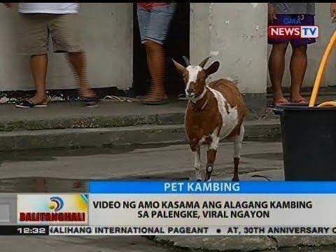 BT: Video ng amo kasama ang alagang kambing sa palengke, viral ngayon