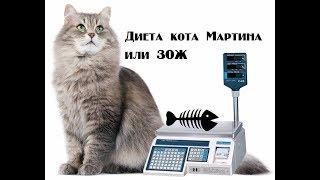 Диета кота Мартина. Часть 1.
