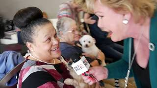 Brenda adopts a puppy mill rescue named Willow