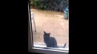 Несчастный кот просится домой. Ржака!