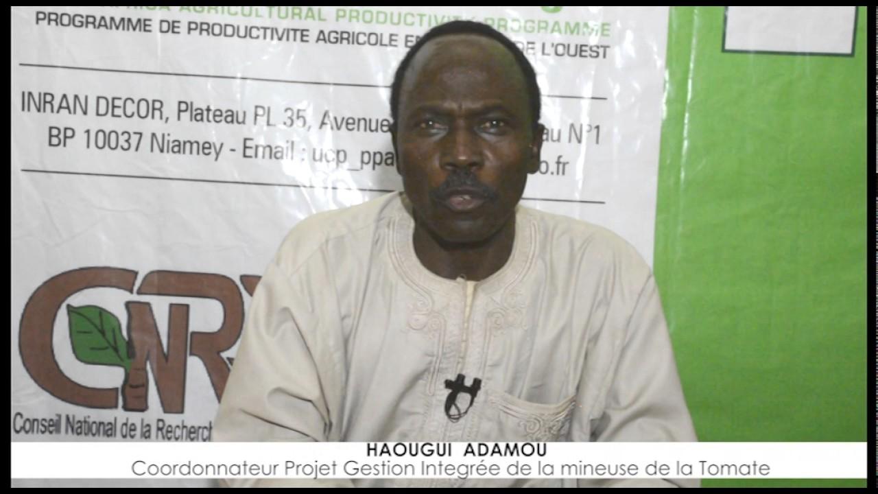 Download Film Doccumentaire Tuta absoluta au Niger