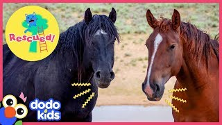 Hero Rescues Wild Horse Family Who Were Separated For So Long | Animal Videos for Kids | Dodo Kids