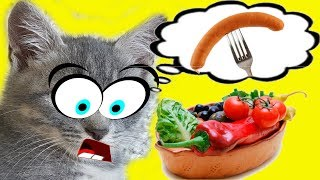 Мое утро. ЧЕМ МЫ КОРМИМ КОРМЯЩУЮ КОШКУ и НОВОРОЖДЕННЫХ КОТЯТ? Смешной кот Макс все знает