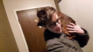How my Abyssinian Cat Larry greets me when I come home