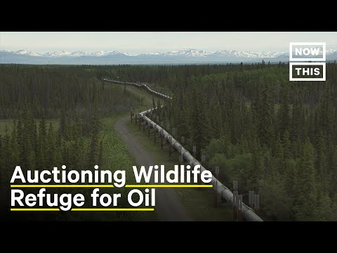 Trump Admin to Auction Off America's Last Wilderness to Oil and Gas Companies | NowThis Earth