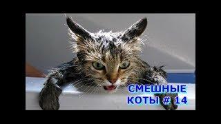 Приколы с кошками и котами #14. Подборка смешных и интересных видео с котиками и кошечками 2017