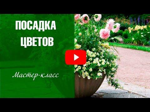 Посадка цветов в кашпо - Садовый декор хитсад  🌼 Мастер-класс  hitsadtv