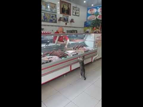 Grocery Clerk Shows Cat Cuts of Meat at Deli Counter - 988028-2