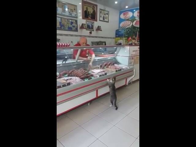 Grocery Clerk Shows Cat Cuts of Meat at Deli Counter – 988028-2