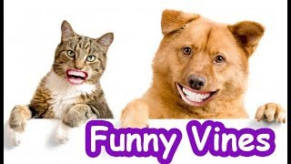 Funny Dog and Cat Vines Compilation 2019 #2|  Funny Animals Videos - TRY NOT TO LAUGH
