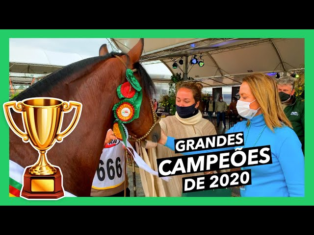 CAMPEÕES DA MORFOLOGIA/ 2020