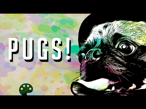 Pugs by Edward M Fielding
