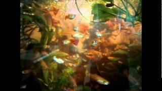 Продам аквариумных рыбок и растения (г. Кунгур)
