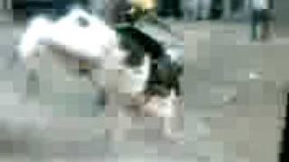 toro el Tijeras de Nicho Arce, Santa Isabel Nayarit