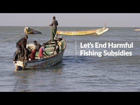Ending Harmful Fishing Subsidies: Senegal