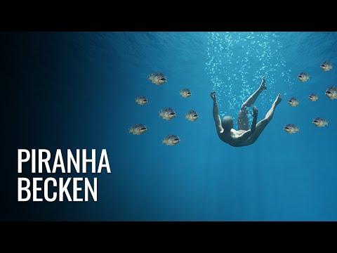 Was wäre, wenn Du in ein Piranha-Becken fallen würdest?