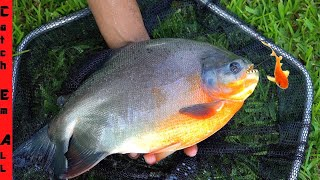 CATCHING PIRANHA in FLORIDA backyard KOI FISH POND!