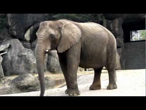 台北木柵動物園 Taipei Zoo (Part-3)