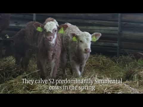 Big profits in Norwegian beef ring