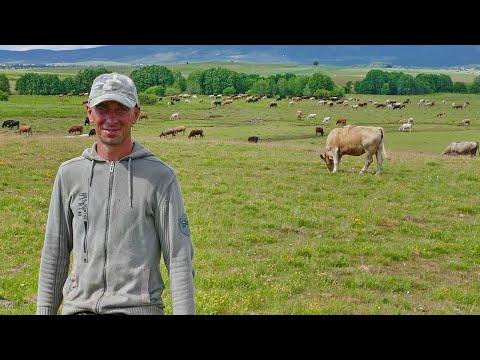 Čuva 500 Krava I Ponosi Se Time, Ne želi Više Da Lomi Leđa Na Građevini