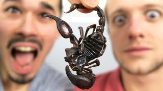 WE EAT INSECTS !