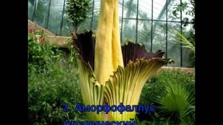 Топ 10 невероятно редких и красивых цветов. Растения. Ботаника. Наука. Красота. Цветы.
