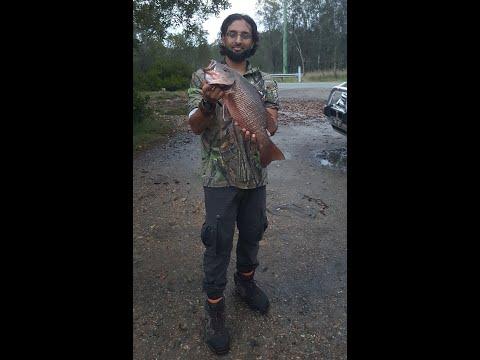 Pimpama River Mangrove Jack