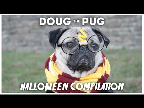 Doug The Pug Halloween Compilation
