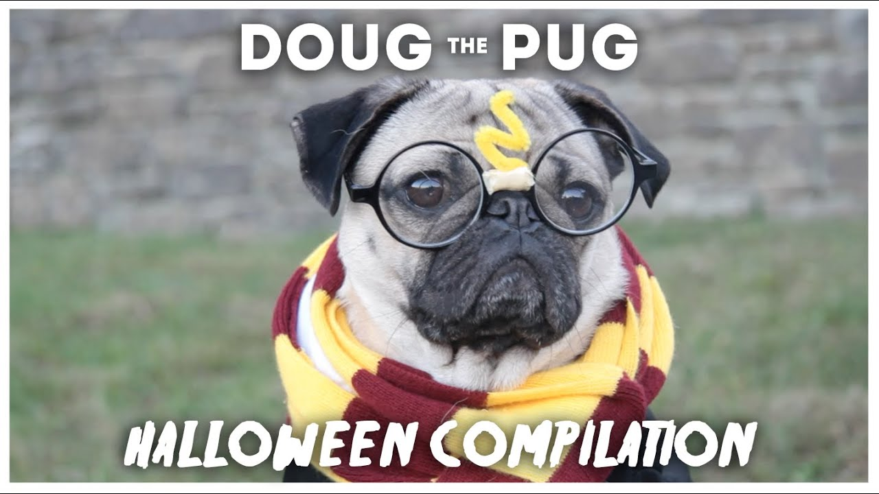 doug the pug halloween compilation youtube - Pugs Halloween
