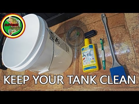 Do This Every Week To Keep Your Fish Tank Clean! (How I Clean My 30 Gallon Freshwater Aquarium)