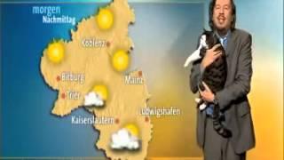 Cat Interrupts German Weather Report thumbnail