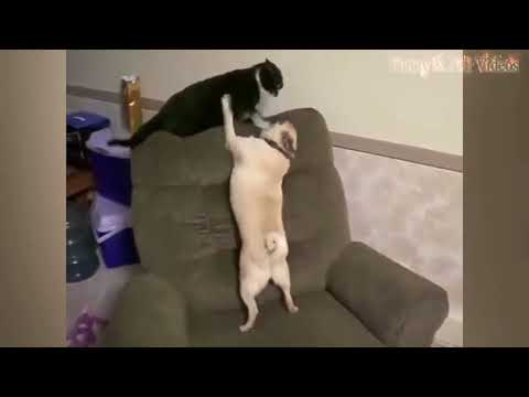 Funny Animals 2017 - Dogs And Cats Humor, I Can Not Help Laughing.