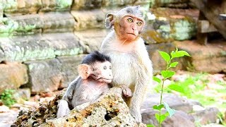 Janet Top Adorable Baby Monkey, So Lovely Baby Monkey Animal Life Actions!