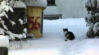 Schnee-Katzen