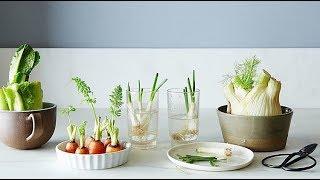 14 Vegetais e Frutas Que Você Pode Plantar e Replantar Dentro de Sua Casa ou Jardim