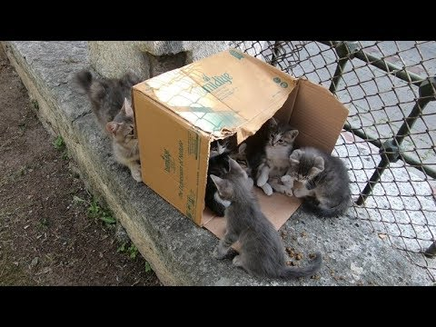 Mother cat is playing hide and seek with her kittens