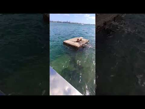 how-is-...-a-tour-in-the-uss-arizona-memorial-in-pearl-harbor-hawaii-video-#2