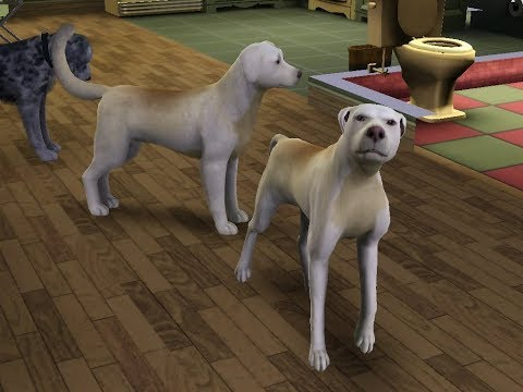 Randomness and bloopers! (Sims 3 Pets)