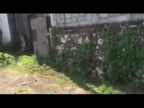 Former MMA fighter AMOKRANE SABET shot dead in Bali