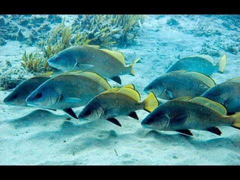Рыбы Черного моря.